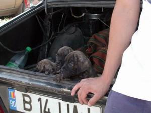 Hundehandler