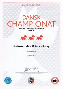 Bichon Havanais Champion Denmark
